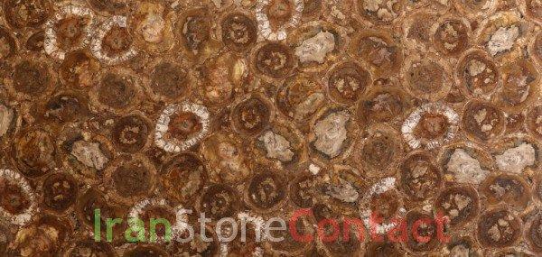 Brown Petrified Wood – Normal